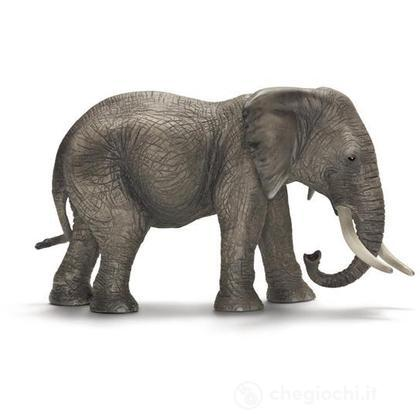 Elefante africano femmina (14657)