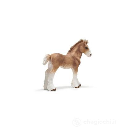 Puledro Clydesdale (13671)