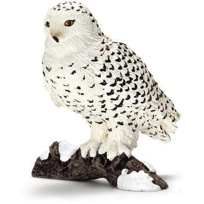Civetta delle nevi (14671)