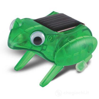 Mini solari: Rana