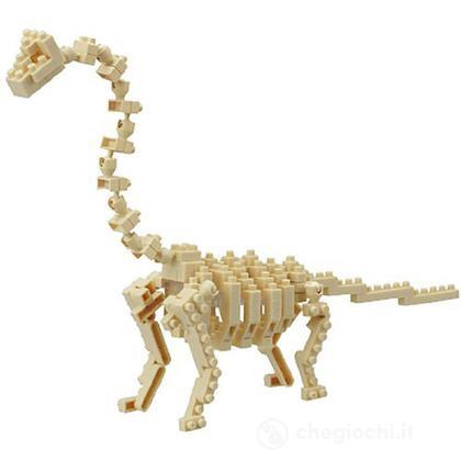 Bronchiosauro Skeleton
