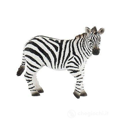 Zebra (63675)