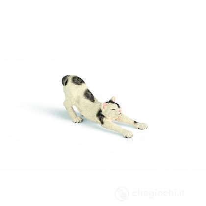 Gatto che si stiracchia (13677)