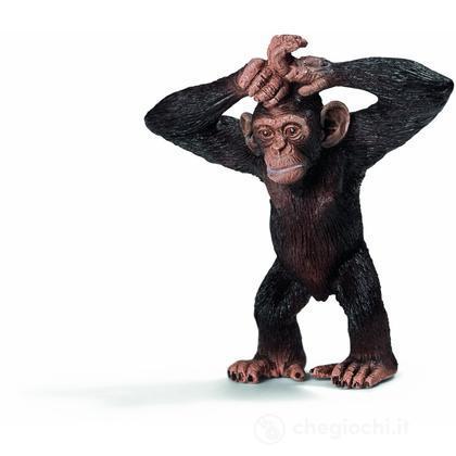 Cucciolo di Scimpanzé (14680)