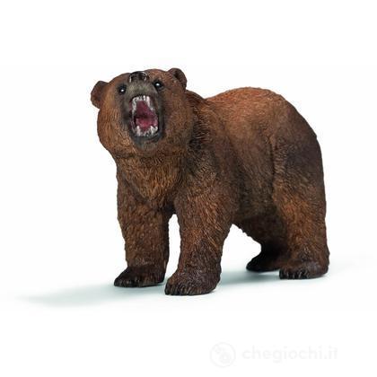 Maschio di Orso Grizzly (14685)