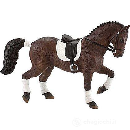 Cavalli - Westphalian Dressage Horse (62693)