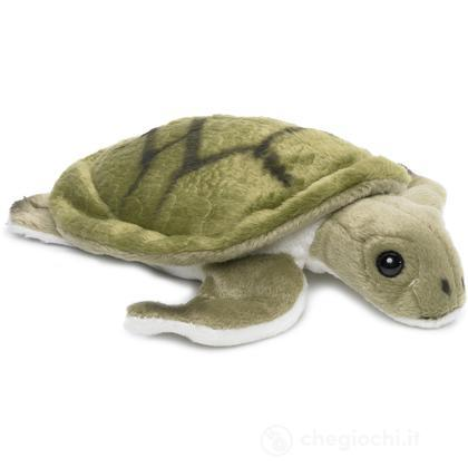 Tartaruga marina piccola