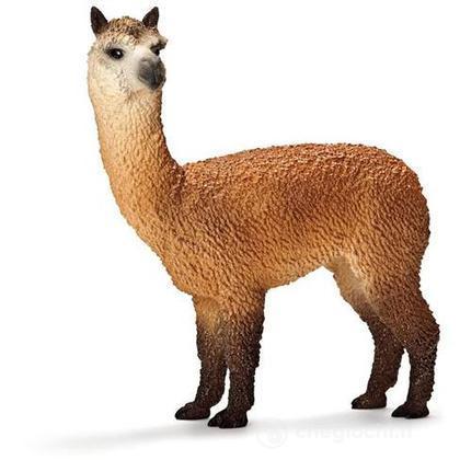 Alpaca maschio (13703)