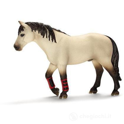 Cavallo scuola di equitazione (13706)