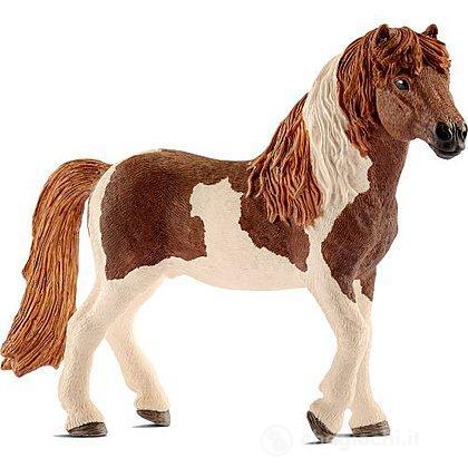 Stallone di Pony Islandese (13815)