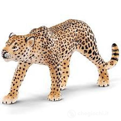 Leopardo (14748)