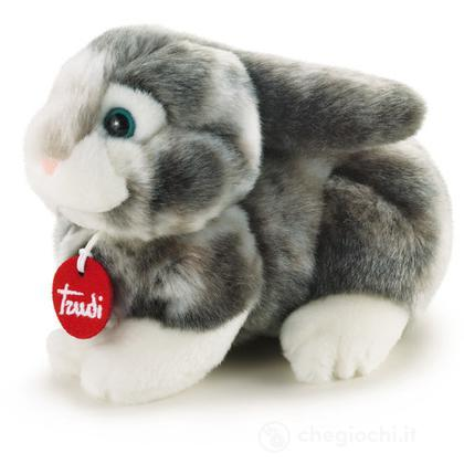 Coniglio grigio Dustin