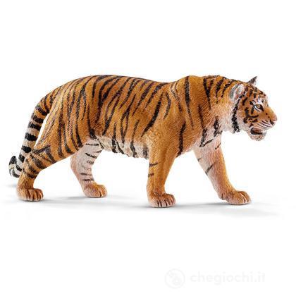 Tigre (14729)