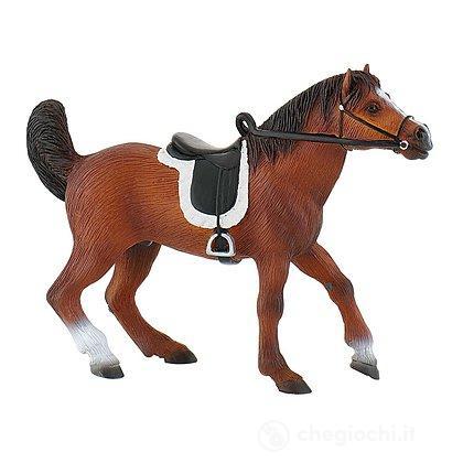 Cavalli - Arabian Stallion (62731)