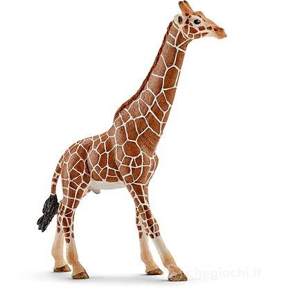 Giraffa Maschio (14749)
