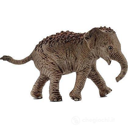 Cucciolo Di Elefante Asiatico (14755)