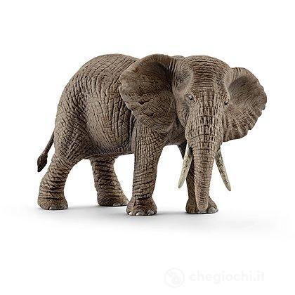 Femmina di Elefante Africano (14761)