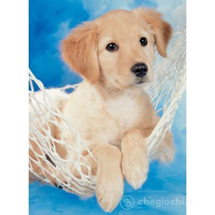 Adorabile cagnolino