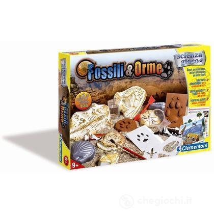 Fossili e Orme (127740)