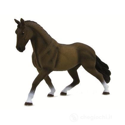 Animal Planet cavallo di hannover stallone