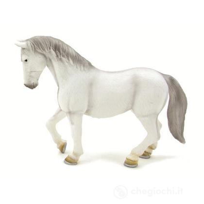 Animal Planet cavallo di lipizzaner giumenta