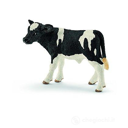Vitello Holstein (13798)