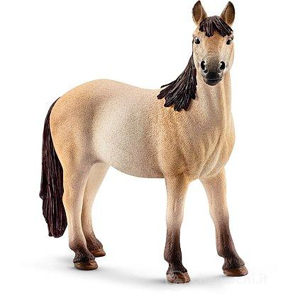 Puledro Mustang (13807)