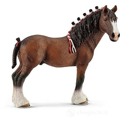 Castrone Clydesdale (13808)