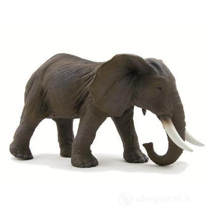 Animal Planet elefante