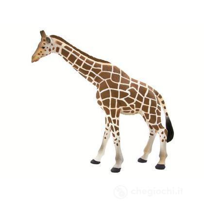 Animal Planet giraffa