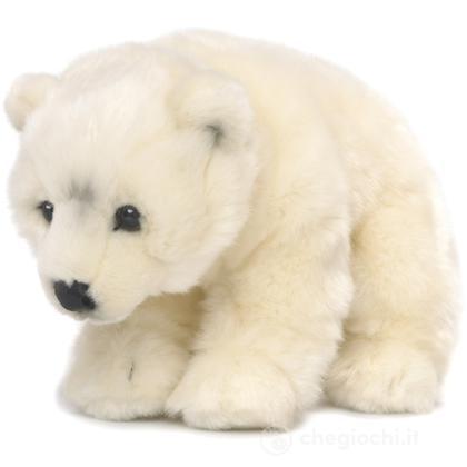 Orso polare medio
