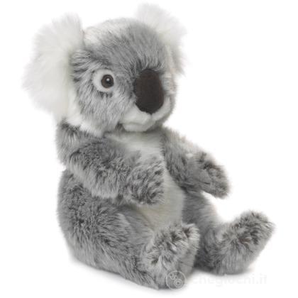 Koala piccolo