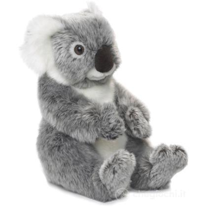 Koala medio