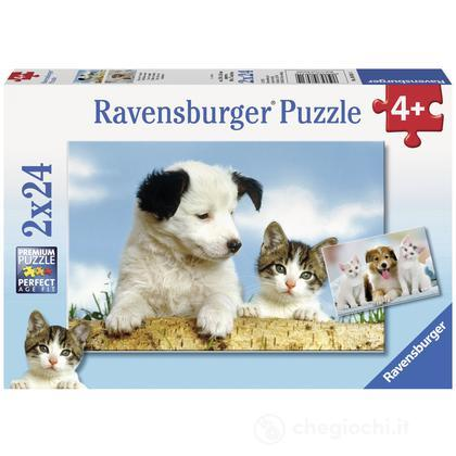 Cani e gatti (8931)