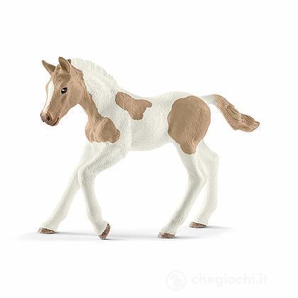 Puledro Paint Horse (13886)