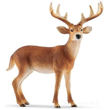 Cervo Virginiano (2514818)